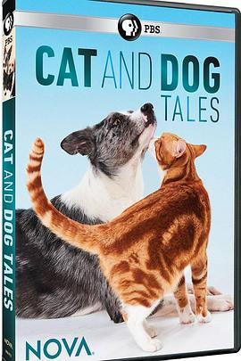 猫的故事2020海报